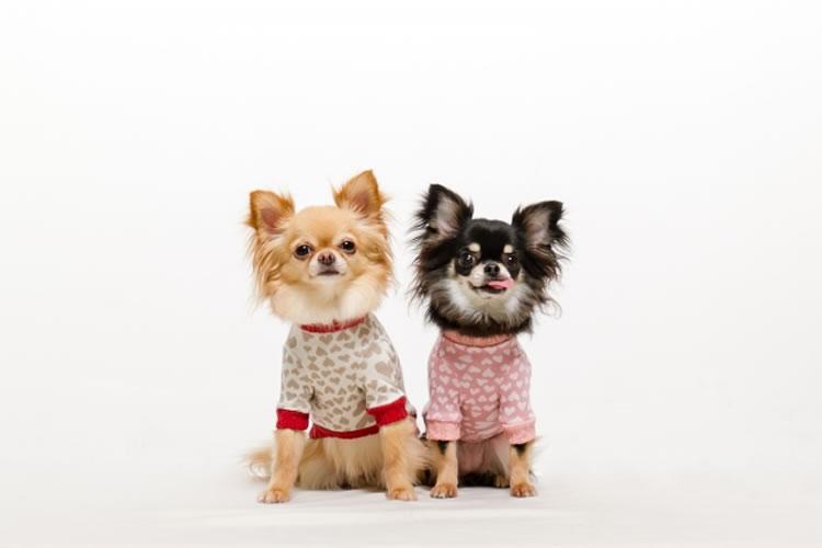 犬や猫に服を着せる