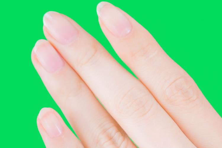 爪の根元の白い部分