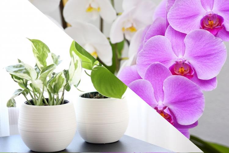 会社で胡蝶蘭や観葉植物を捨てる方法