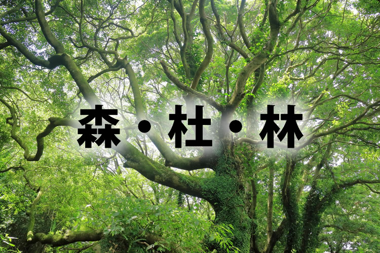 「森」「杜」「林」の違い