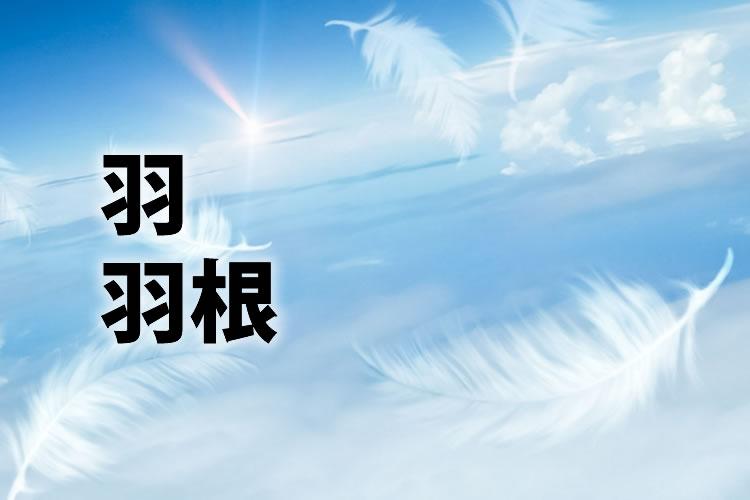 「羽」「羽根」の意味と違い