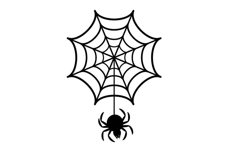 朝蜘蛛は縁起が良い(朝蜘蛛を殺してはいけない)