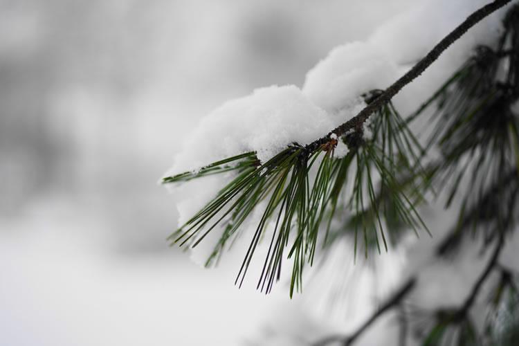大雪の年は豊作