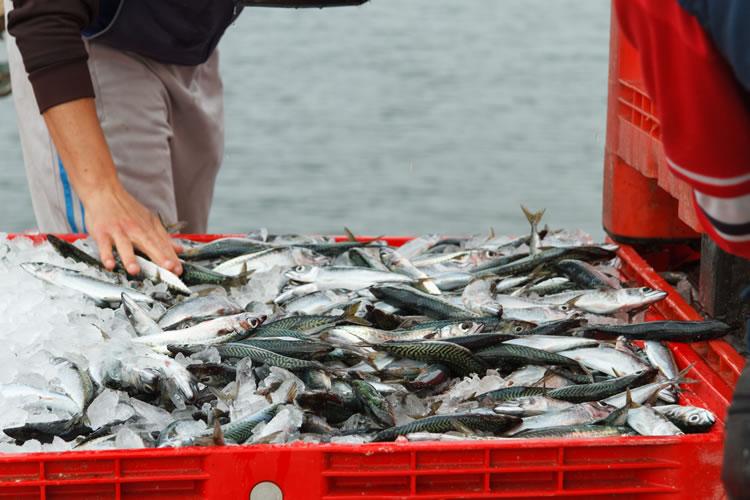 「漁獲量」「水揚げ量」「収穫量」の意味と違い