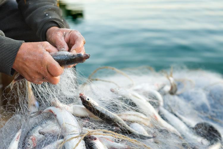 「大漁」と「豊漁」の意味と違い