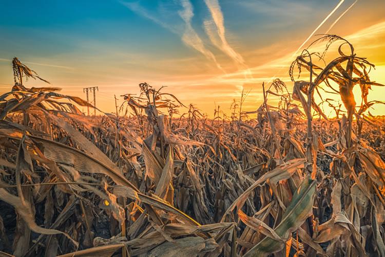 農業への影響