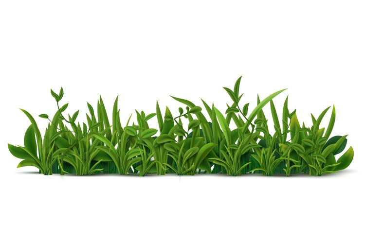「雑草」「野草」の意味と違い