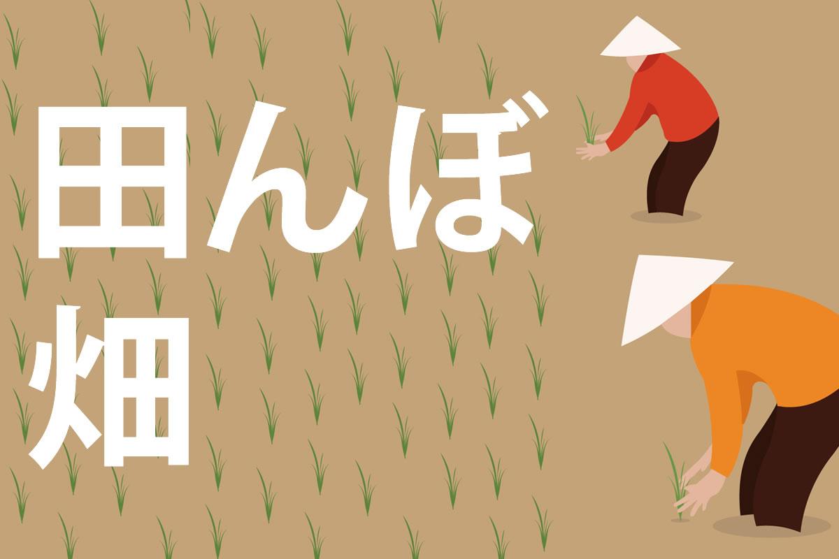 「田んぼ」「畑」の意味と違い